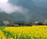 Flower Lake Field in Ha Giang