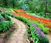Flower garden in Dalat