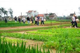 Tra Que Vegetable Farming tour