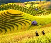 Y Linh Ho