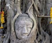 Ayutthaya- Buddha_Face_Wat_Mahathat