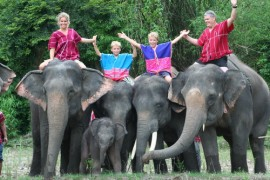 Chiang Mai Elephant Safari