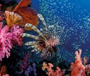 Coral Thailand