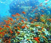 Coral in Nha trang