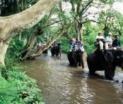 Elephant Safari Chiang Mai