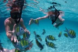 Koh Nang Yuan Snorkeling Tour