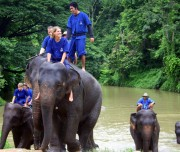 Lampang Elephant conservation central