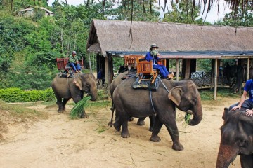 Laos Elephant camp