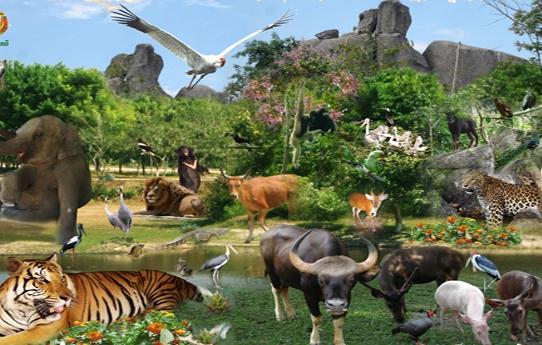 Phnom Tamao Wildlife
